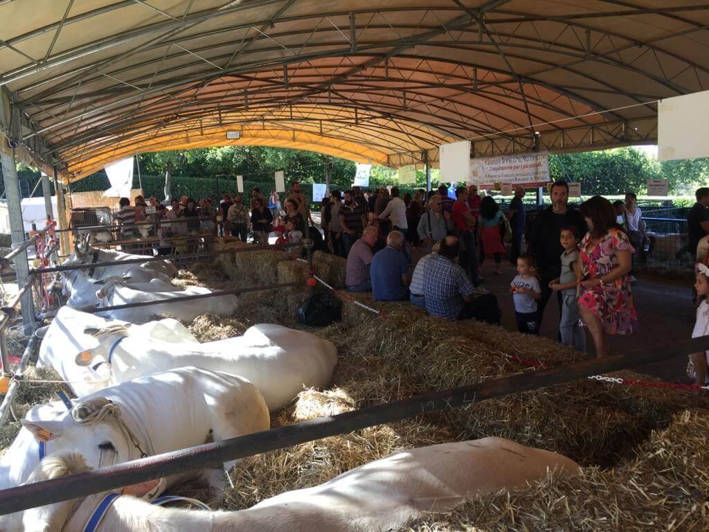 Bagno a Ripoli (FI): lezioni di mungitura  una grande fattoria a cielo aperto con l'Antica Fiera contadina