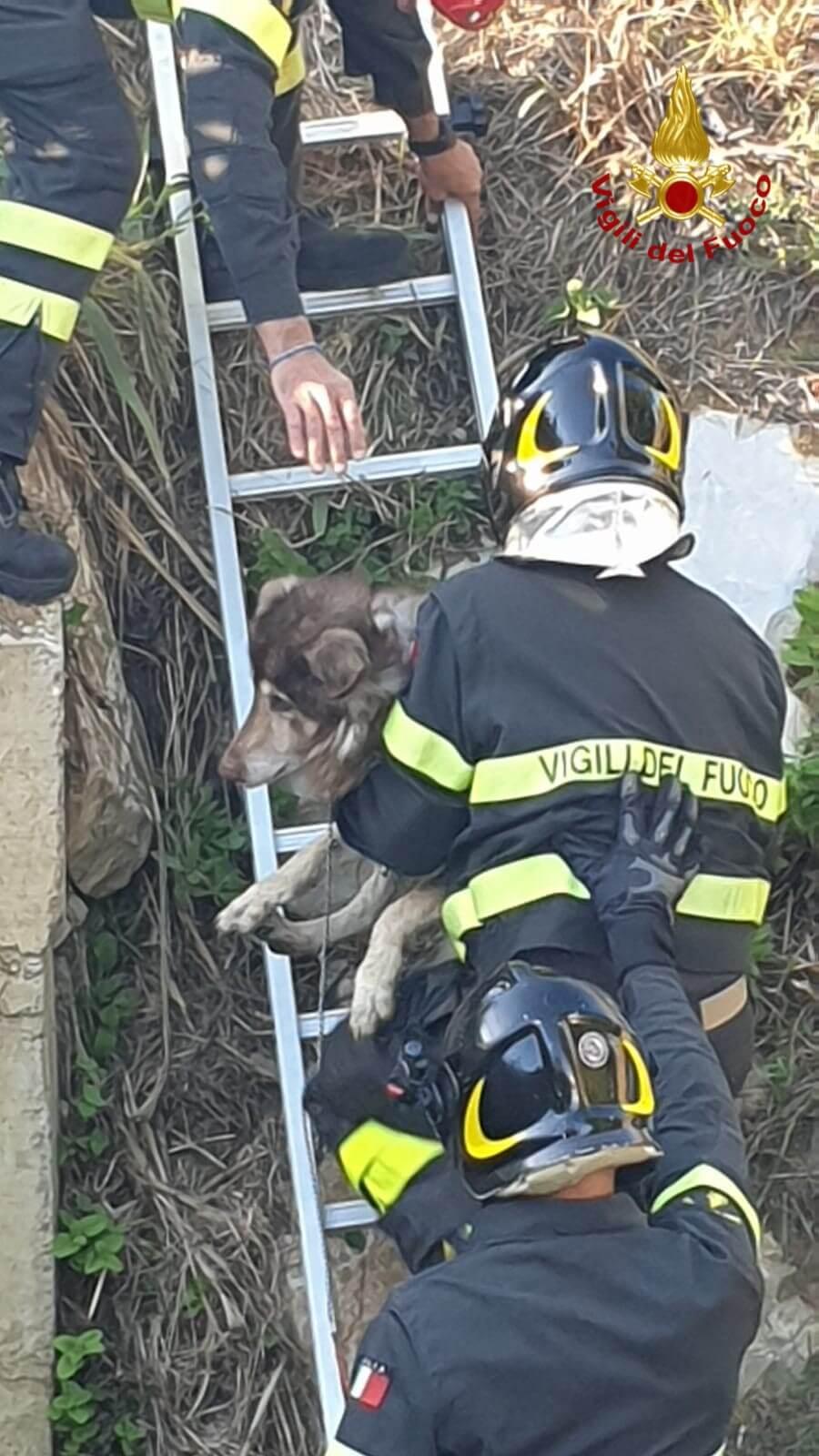 Cane anziano scivola nel torrente, salvato dai pompieri