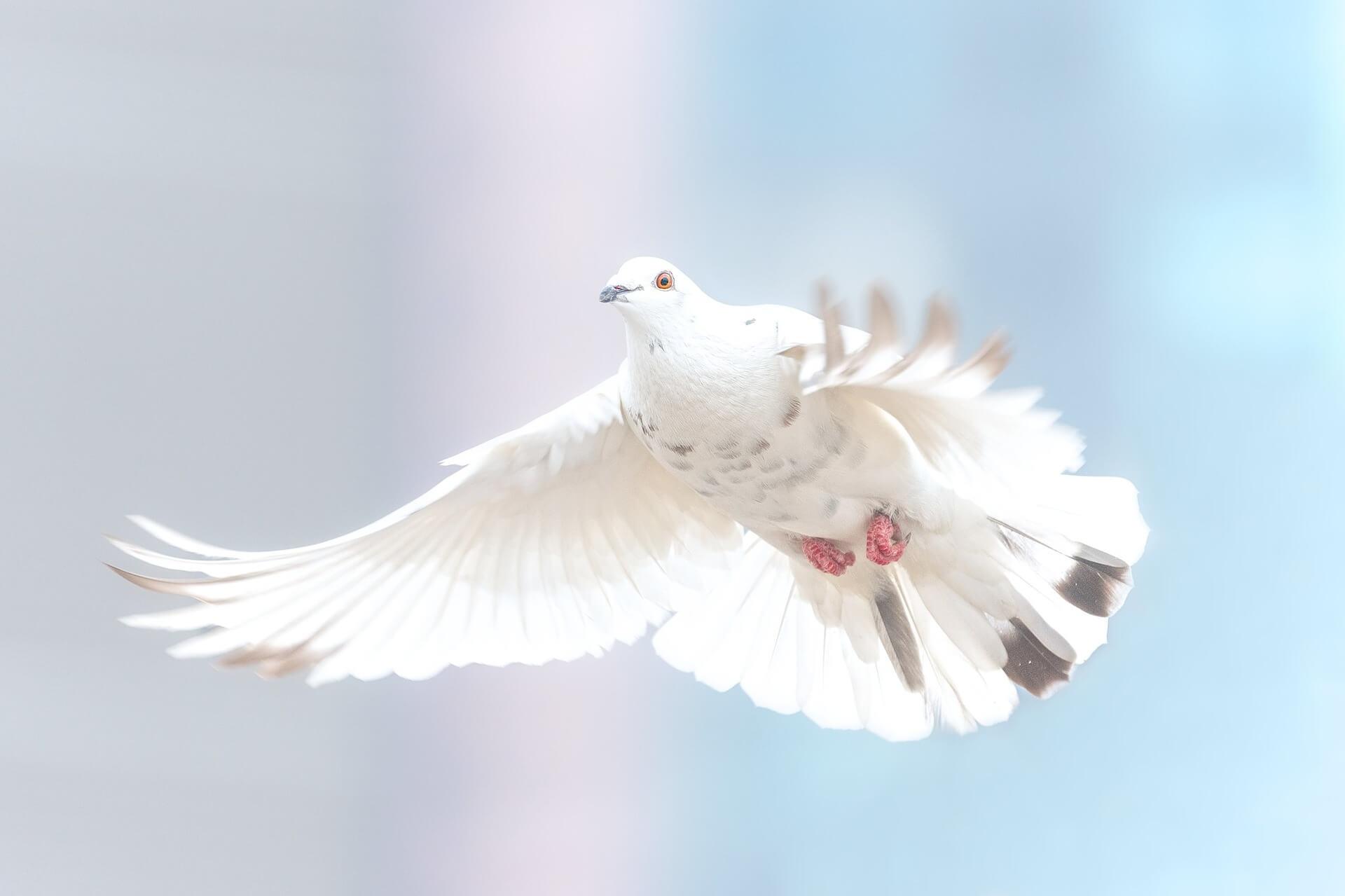A scuola di pace