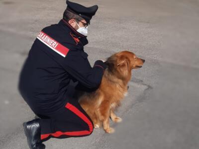 Non vede più il suo cane e crede che lo abbiano rubato. Ritrovato dai carabinieri