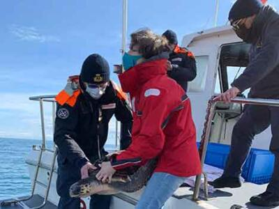 Tartaruga Caretta caretta salvata due volte in due anni da reti a strascico