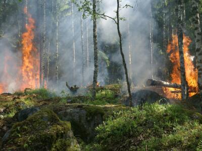 Incendi boschivi, approvato il Piano prevenzione per le pinete litoranee di Grosseto