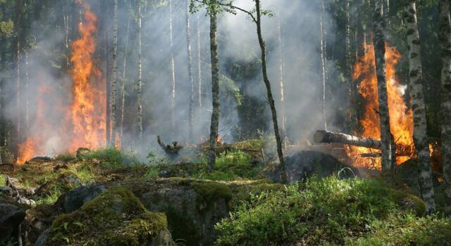 Incendi: fiamme nella notte a Piombino