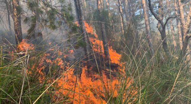 Emergenza incendi, il ministro relazione alla Camera