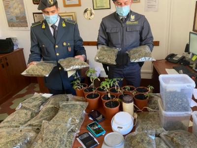 Arrestato 40enne per coltivazione di marijuana con finalità allo spaccio