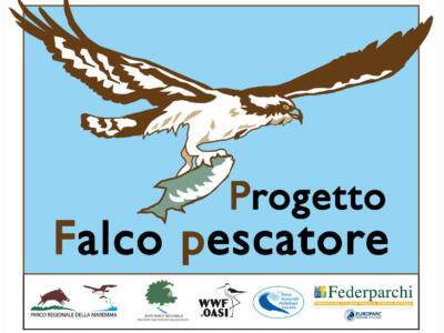 Il Falco pescatore nidifica a Capraia e nell'Arcipelago Toscano dopo 90 anni