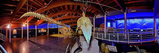 Estate al Museo di Storia Naturale del Mediterraneo