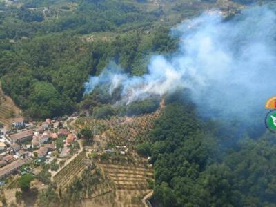 Incendi, in fiamme boschi e oliveti vicino Lucca