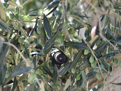 5 fototrappole intelligenti contro l'abbandono dei rifiuti