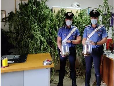 Coltivatore di marijuana arrestato dai Carabinieri