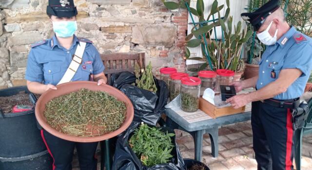 Arrestato dai carabinieri per coltivazione e detenzione di marijuana